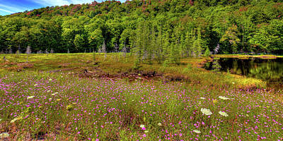Photograph - Wildflowers At Bald Mountain Pond by David Patterson