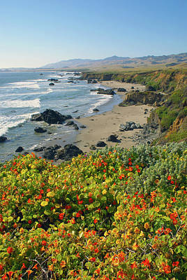 Photograph - Wildflowers At Big Sur  by Floyd Snyder