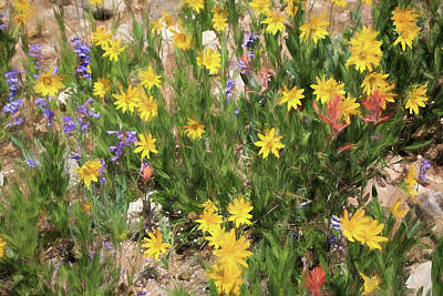 Photograph - Wildflowers At Cedar Breaks by Donna Kennedy