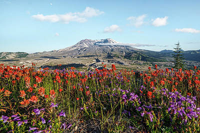 Photograph - Wildflowers At Mount St Helens by Wes and Dotty Weber