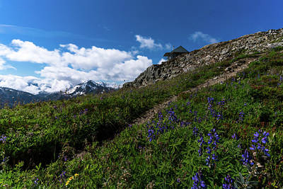 Photograph - Wildflowers At North Cascades National Park by Serge Skiba