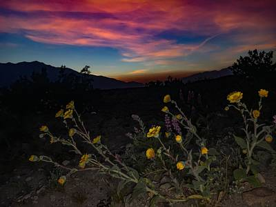 Photograph - Wildflowers At Sunset by Chris Tarpening