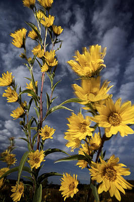 Wildflowers Blooming On The Kansas Art Print by Jim Richardson