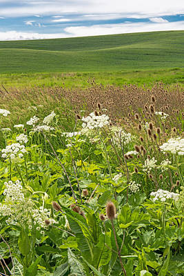 Photograph - Wildflowers Border The Palouse   Washington State by Willie Harper