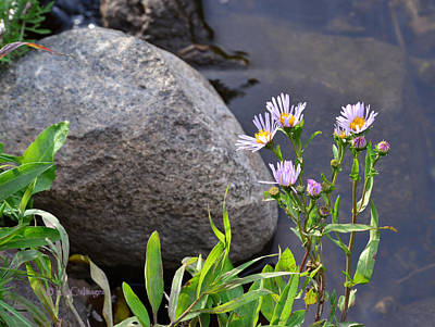 Photograph - Wildflowers By A Stream by Kae Cheatham