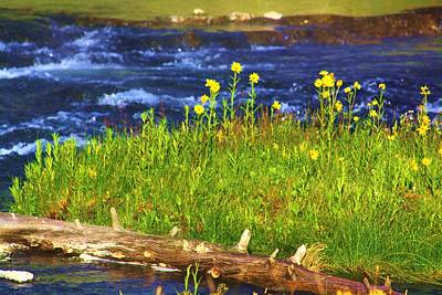 Wildflowers By The River Art Print by Russell  Barton