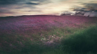 Icm Photograph - Wildflowers by Chris Dale