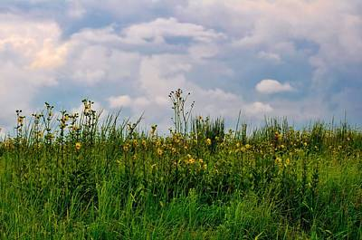 Photograph - Wildflowers Everywhere by Michelle McPhillips