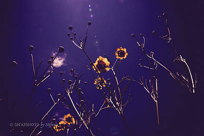 Photograph - Wildflowers From Below by Stefanie Silva
