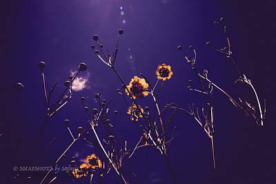 Photograph - Wildflowers From Below by Stefanie Silva