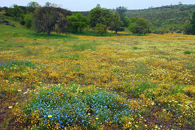 Photograph - Wildflowers Galore by Ram Vasudev
