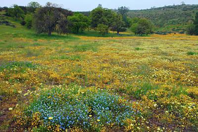 Photograph - Wildflowers Galore by Ram Vasudev