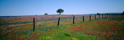 Clear Sky Photograph - Wildflowers In A Field, Texas, Usa by Panoramic Images