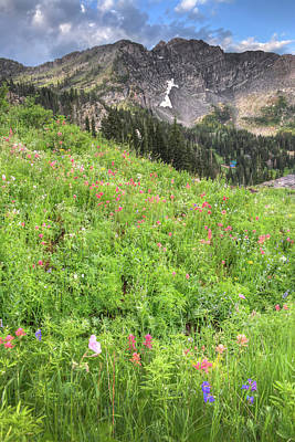 Photograph - Wildflowers In Albion Basin by Utah Images