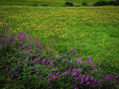 Photograph - Wildflowers In An Irish Field by James Truett