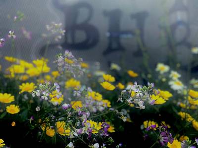 Photograph - Wildflowers In Bayview by Lynda Anne Williams