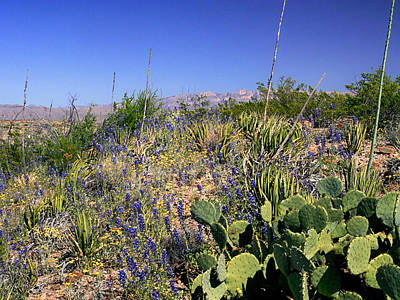 Photograph - Wildflowers In Big Bend by Charles McKelroy