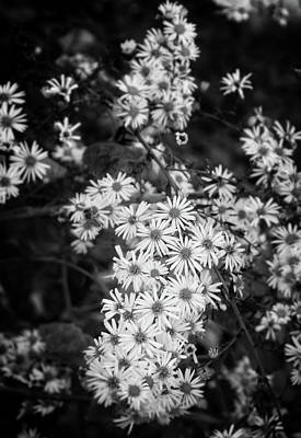 Photograph - Wildflowers In Black And White by Chrystal Mimbs