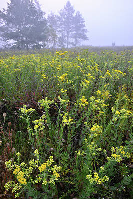 Photograph - Wildflowers In Fog At Brookdale by Ray Mathis