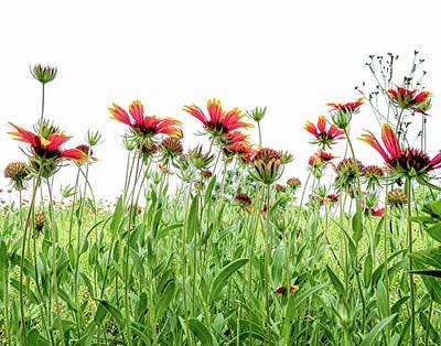 Photograph - Wildflowers In Geogia by Nancy Kirkpatrick