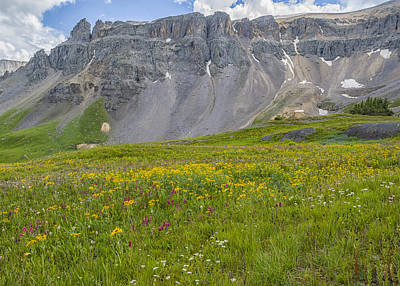 Photograph - Wildflowers In Governor Basin by Alan Toepfer