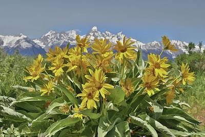 Yellowstone Mixed Media - Wildflowers In Grand Teton National Park by Dan Sproul