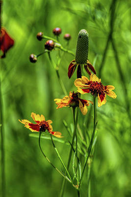 Photograph - Wildflowers In Kansas by Alana Thrower