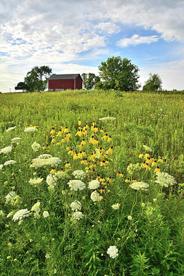 Photograph - Wildflowers In Kishwaukee Headwaters Conservation Area by Ray Mathis