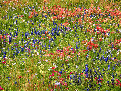 Photograph - Wildflowers In Many Colors by Charles McKelroy