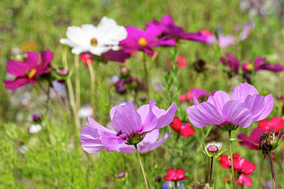 Photograph - Wildflowers In Meadow by Arterra Picture Library