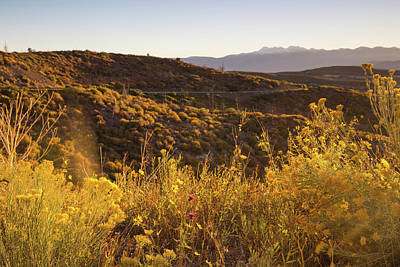 Photograph - Wildflowers In Mesa Verde by Kunal Mehra