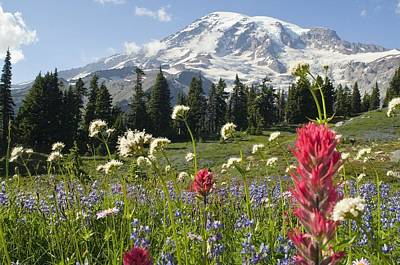 Snow Covered Fields Photograph - Wildflowers In Mount Rainier National by Dan Sherwood