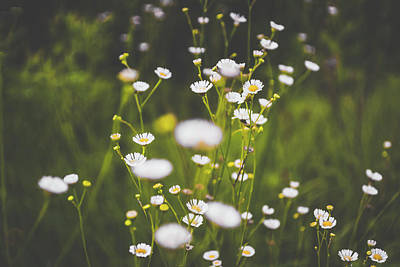 Photograph - Wildflowers In Summer by Shelby Young