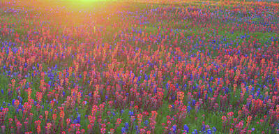 Robert Bellomy Royalty-Free and Rights-Managed Images - Wildflowers in Texas by Robert Bellomy
