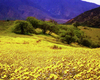 Photograph - Wildflowers In The San Emigdio Mountains by Timothy Bulone