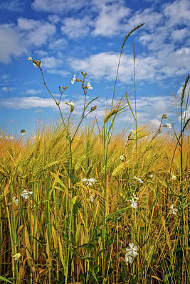 Photograph - Wildflowers In The Wheat by Debra and Dave Vanderlaan