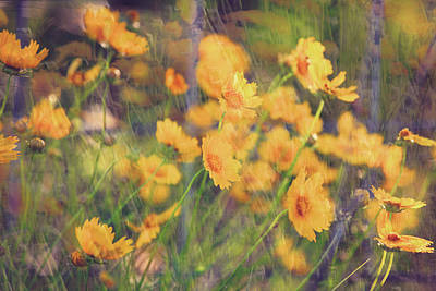 Photograph - Wildflowers In The Wind by Toni Hopper