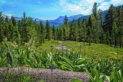 Photograph - Wildflowers In Upper Yosemite by Lynn Bauer
