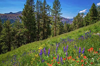 Photograph - Wildflowers In Yosemite's Hanging Garden by Lynn Bauer