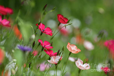 Wildflowers Meadow Art Print