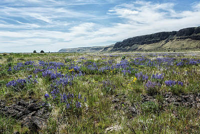 Photograph - Wildflowers Near Steens Mountain Wilderness by Belinda Greb