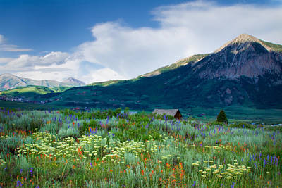 Photograph - Wildflowers Of Crested Butte by Kristal Kraft