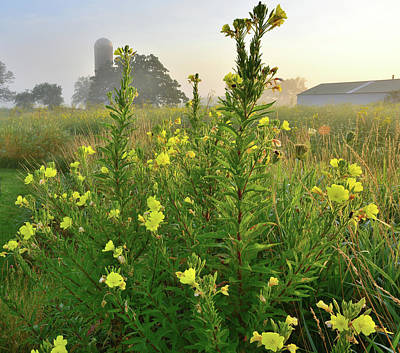 Photograph - Wildflowers Of Glacial Park Glow At Sunrise by Ray Mathis