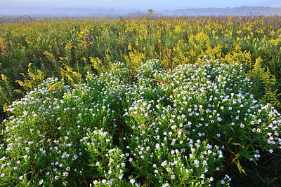 Photograph - Wildflowers Of Glacial Park Prairie by Ray Mathis