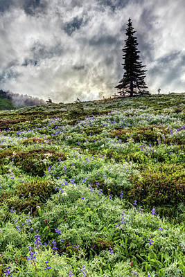 Photograph - Wildflowers Of Mount Rainier by Pierre Leclerc Photography