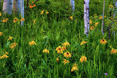 Photograph - Wildflowers Of The Aspen Forest by John De Bord