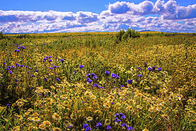 Photograph - Wildflowers Of The Carrizo Plain Superbloom 2017 by Lynn Bauer