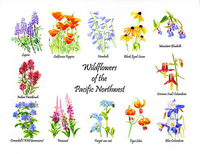 Lupine Painting - Wildflowers Of The Pacific Northwest Poster by Sharon Freeman