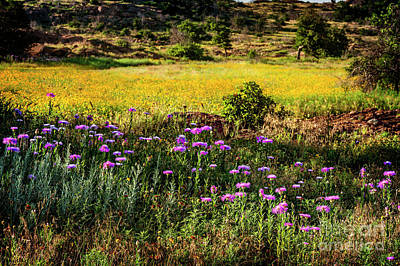 Wildflowers Of The Wichita Mountains Print by Tamyra Ayles