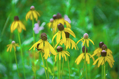 Photograph - Wildflowers Of Yellow by Bill Pevlor
